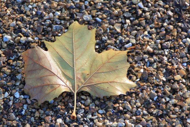 leaf-1083428_960_720