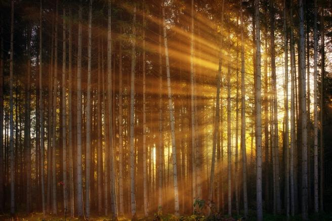 forest-3124098_1280.jpg