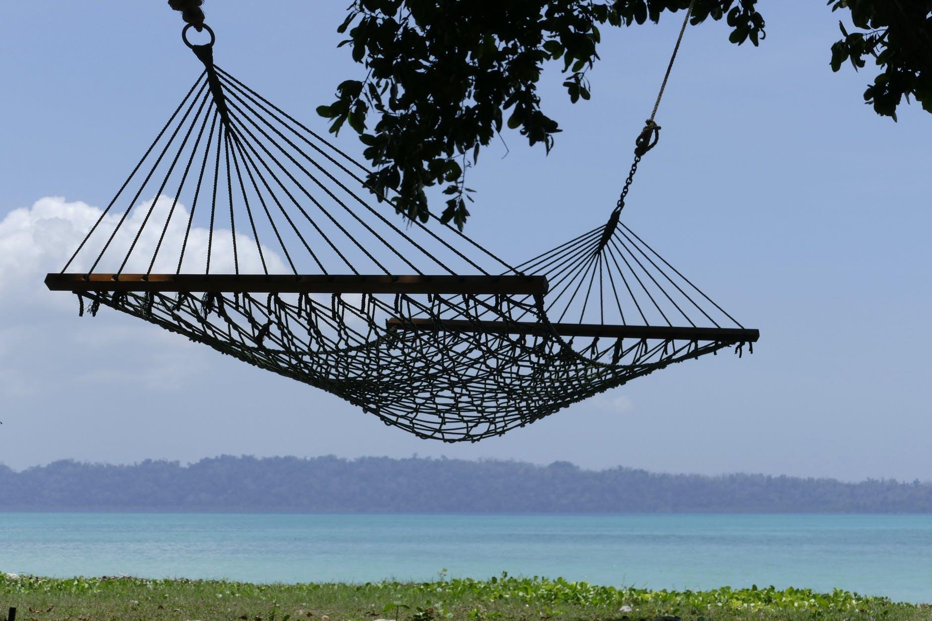 aquatic plants beach daylight hammock